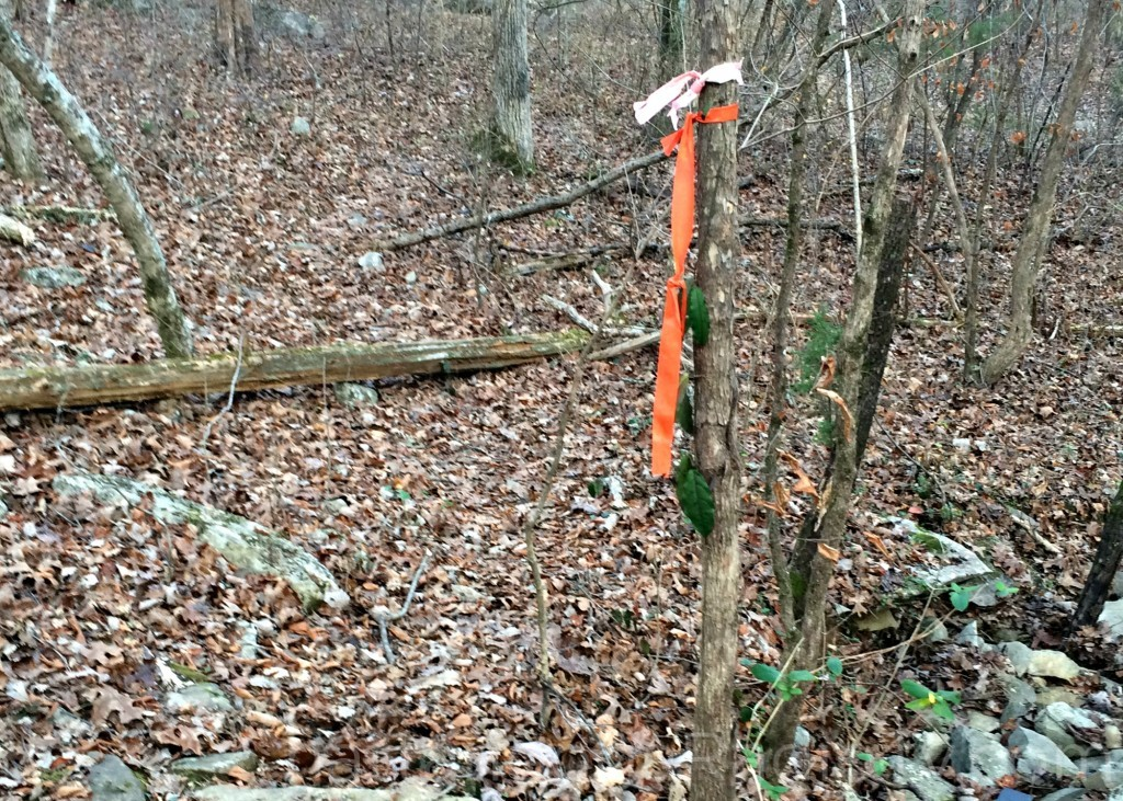 Clue #1: the orange surveyors tape